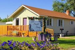 Lil' Purple Pansy, Aberdeen,Idaho